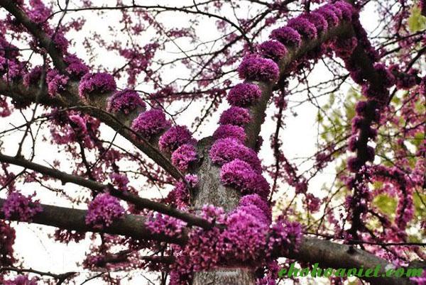 Kết quả hình ảnh cho cây hoa hạnh phúc