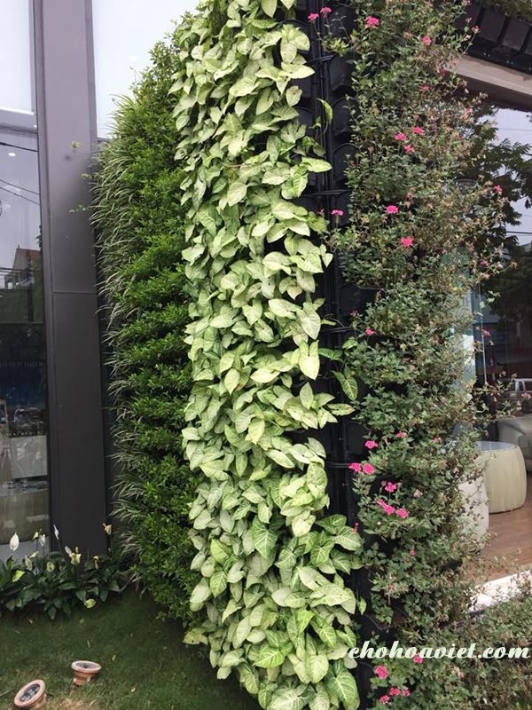 vườn tường, vườn đứng, tường cây