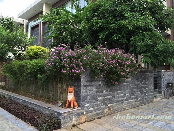 Thiết kế sân vườn có diện tích nhỏ – Đơn giản nhưng vẫn đẹp