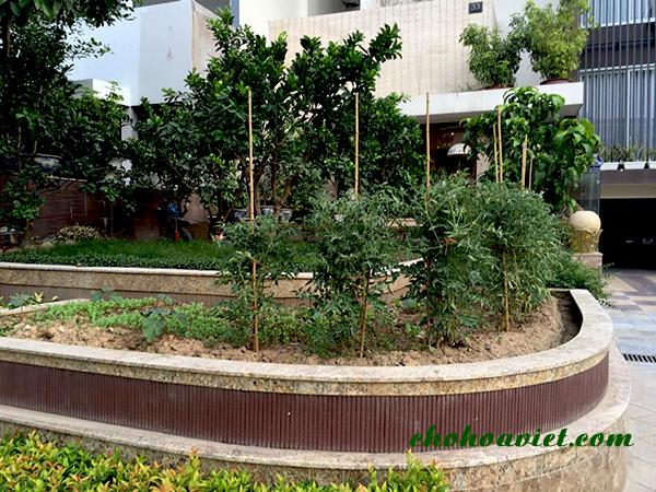 Thiết kế sân vườn lấy chủ đạo là cây ăn quả