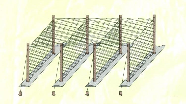 lưới giàn leo phủ nóc