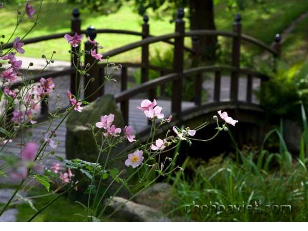 cầu trang trí sân vườn11