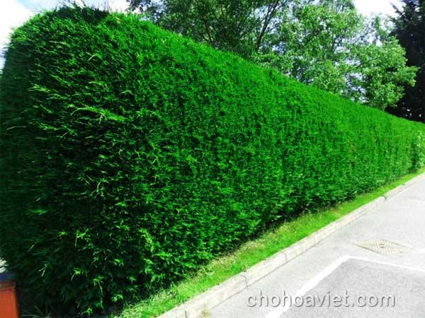 Hàng rào trang trí sân vườn2