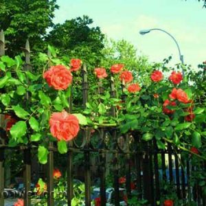 Hàng rào trang trí sân vườn