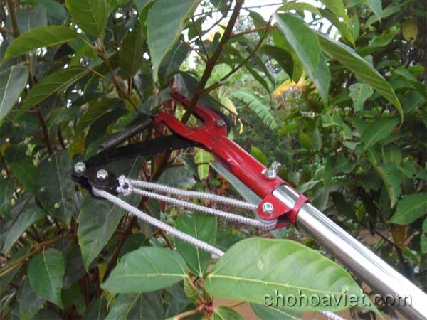 kéo cắt cành cây trên cao