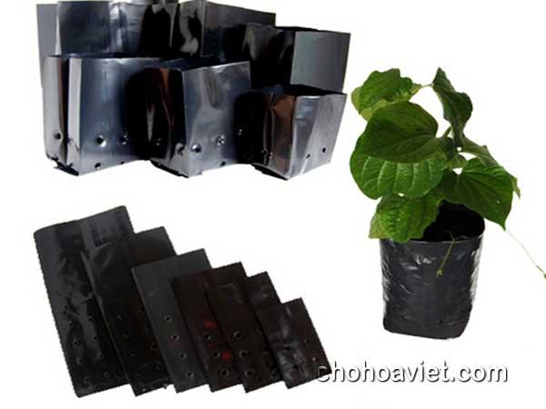 Túi bầu ươm trồng hoa cây cảnh – Sản phẩm chất lượng
