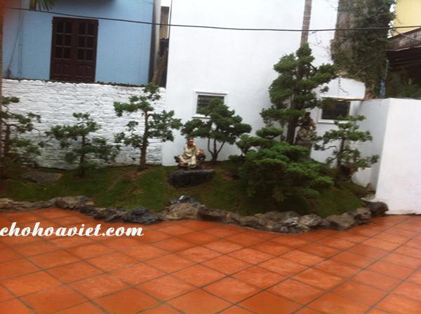Thiết kế sân vườn đồi tùng mini